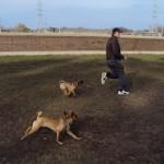 puggle_dog_park_2