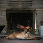 Cormac_puggle_fireplace