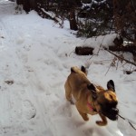 maddy_puggle_winter_hike