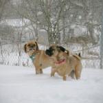 puggle_snowmageddon_3