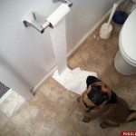 maddy_puggle_toiletpaper