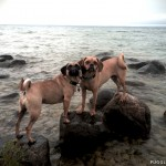 puggles_lake_michigan_swimming2