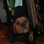 cormac_closet_puggle